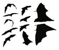 Fliegen-Schläger Stockfoto