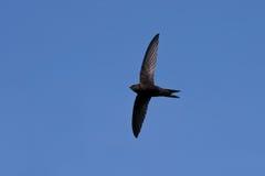 Fliegen schnell Stockfotografie