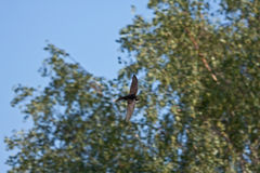 Fliegen schnell gegen die Bäume Lizenzfreie Stockfotos
