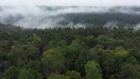 Fliegen Sie über einen Wald mit Nebel im Abstand stock footage
