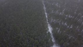 Fliegen Sie mit dem Brummen über einem schneebedeckten Wald stock video
