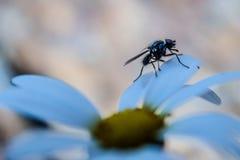 Fliegen Sie Schattenbilder über den Blumenblättern einer Blume Stockfotos