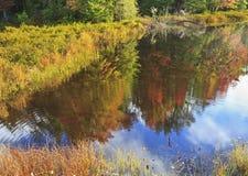 Fliegen-Teich-Herbst-Reflexionen Stockbild