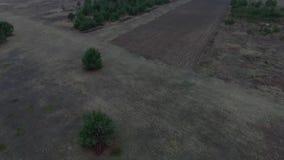 Fliegen um den Baum stock video footage