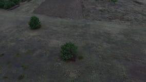Fliegen um den Baum stock footage