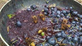 Fliegen und Wespen stock video footage