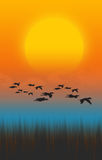 Fliegen-Vogel Lizenzfreies Stockbild