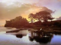 Fliegen-Vogel an einer Lagune Stockbild