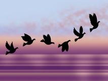 Fliegen-Vogel-Show-Schauer-Fall und eisiges vektor abbildung