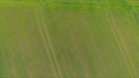 Fliegen wirklich schnelles über einem Maisfeld bei Sonnenuntergang stock footage
