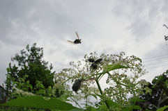 Fliegen zum freien Marienkäfer stockbild