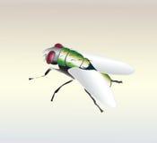 Fliegenabbildung Lizenzfreie Stockfotografie