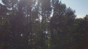 Fliegenabflussrinnenwald stock footage