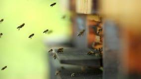 Fliegenbienen mit Bienenstock stock video footage