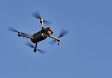 Fliegenbrummen Lizenzfreie Stockfotos