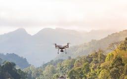 Fliegenbrummen mit Gebirgshintergrund Stockbild