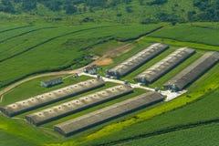 Fliegende Ackerland-Feld-Hühnerstifte Stockbilder