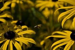 Fliegende Biene Stockfoto