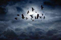 Fliegende Raben lizenzfreie stockfotos