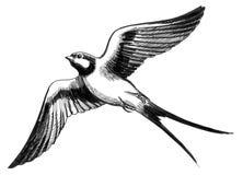 Fliegende Schwalbe stock abbildung