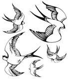 Fliegende Schwalben Stockfotografie