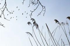 Fliegende schwarze Vögel Stockfotos