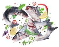 Fliegende Seebarschfische und verschiedene Gewürze Über Weiß stockbilder