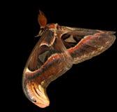 Fliegende sehr große Mottenbasisrecheneinheit Lizenzfreie Stockfotos