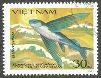 Fliegender Fisch, Cypselurus-spilopterus stockfotos