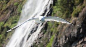 Fliegender weißer Vogel Stockfotografie