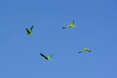 Fliegendes grünes Quadrat Stockfoto