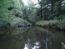 Fliegenfischen im ruhigen Wasser Stockbilder