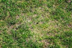 Fliegenhummel über Gras Stockfotos