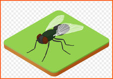 Fliegeninsekt Musca domestica Stockbilder
