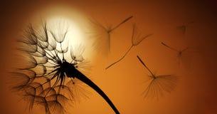 Fliegenlöwenzahnsamen auf einem Sonnenunterganghintergrund lizenzfreies stockbild