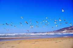 Fliegenseemöwe Lizenzfreie Stockfotografie