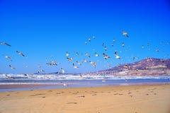 Fliegenseemöwe Lizenzfreies Stockbild