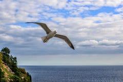 Fliegenseemöwen im Himmelsommer in der Krim stockfotos
