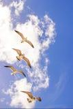Fliegenvögel stockbild