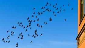 Fliegenvögel im Himmel morgens bei Sonnenaufgang Stock Abbildung