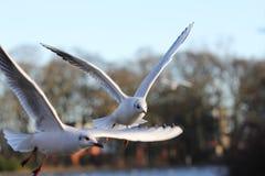 Fliegenvögel im Park lizenzfreie stockbilder