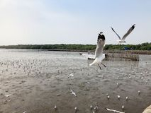 Fliegenvögel am Mangrovenwald Lizenzfreies Stockfoto