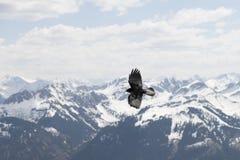 Fliegenvogel gegen die Alpen Stockfoto