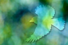Fliegenvogel, grüner Hintergrund Stockfoto