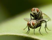 Flies royalty free stock photos