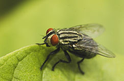 Flies. On the leaf Royalty Free Stock Image