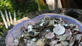 Flies alight on seashells, Phu Quoc island, Kien Giang province, Vietnam. Phu Quoc is blessed with favourable natural environment like the virgin forest of stock video