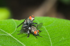 The flies are breeding. In rain forest from Thailand stock photo
