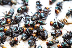 Flies caught on trap Royalty Free Stock Photos