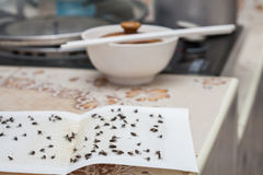 Flies caught on white sticky fly trap Stock Photos